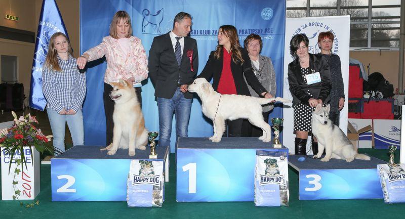Best Minor Puppy - BIS IDS Celje (Slovenia), Saturday, 18 February 2017