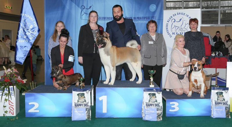 Best Puppy - BIS IDS Celje (Slovenia), Saturday, 18 February 2017